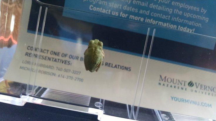 Frog at the Fair