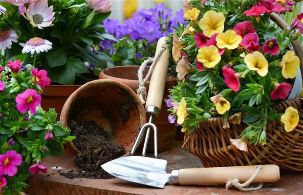 gardening for blog
